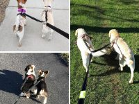Correas Dobles para Perros Extensibles y Reflectantes